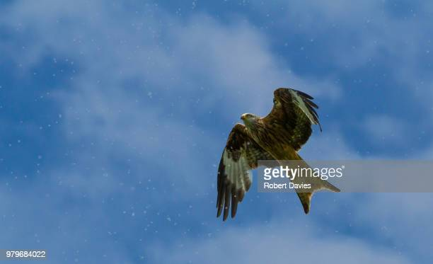 Flying bird against clouds