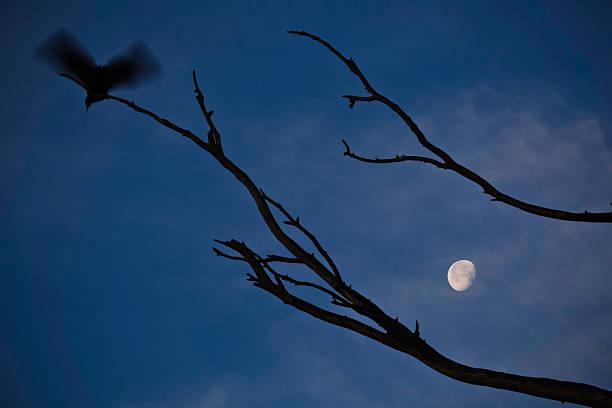 Flying Bird And The Moon Wall Art