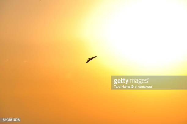 A flying bird around sun