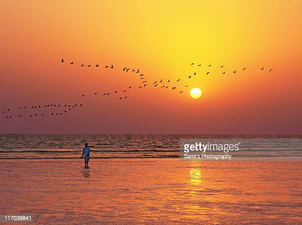 Flying birds at sunset