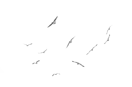 Flying birds, Isolated on white background 599711656