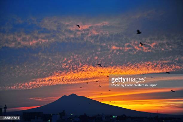 flying birds - hirosaki stock pictures, royalty-free photos & images