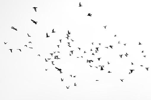 Flying birds 499845982