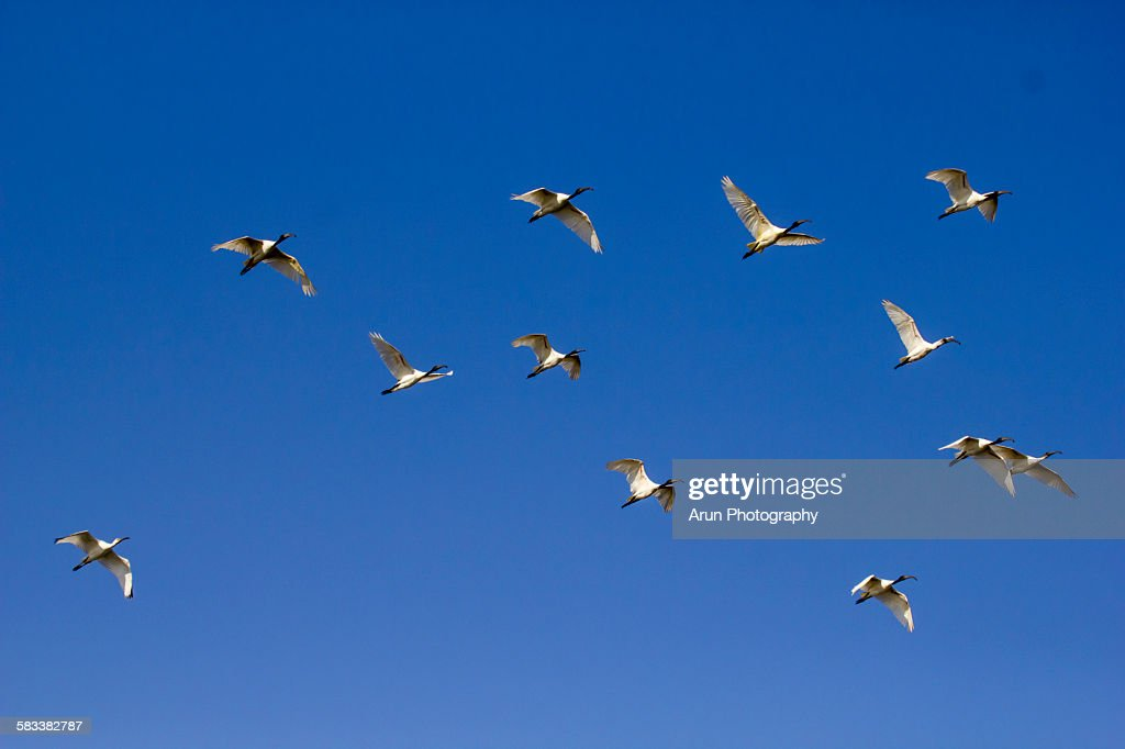 Flying birds : Stock Photo