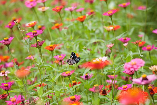 Flying Butterfly In A Beautiful Meadow Of Wild Flowers. Wall Art