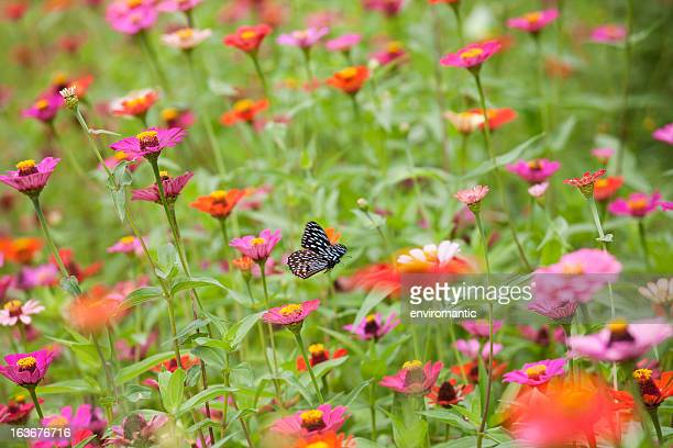flying butterfly in a beautiful meadow of wild flowers. - meadow stock photos and pictures