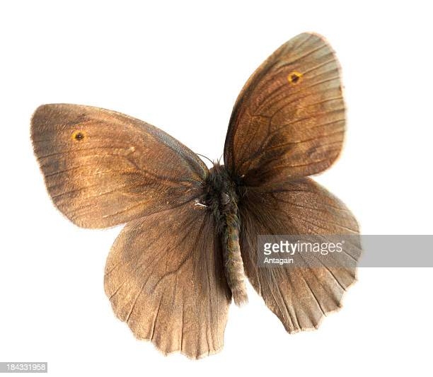 flying butterfly - moth stock pictures, royalty-free photos & images