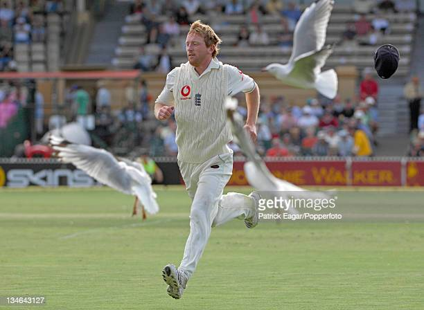 Flying Collingwood Paul Collingwood chases after a ball with seagulls Australia v England 2nd Test Adelaide Dec 06
