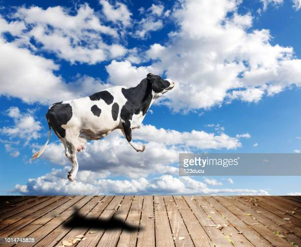 flying cow - create cultivate stock pictures, royalty-free photos & images