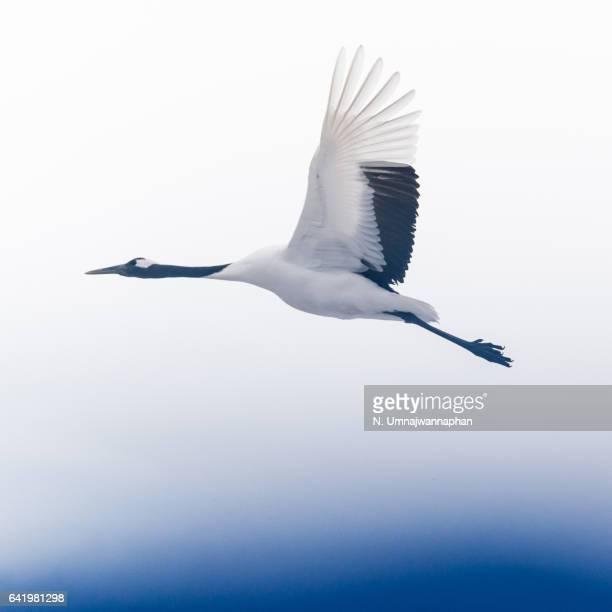 13,508点の鶴のストックフォト - Getty Images