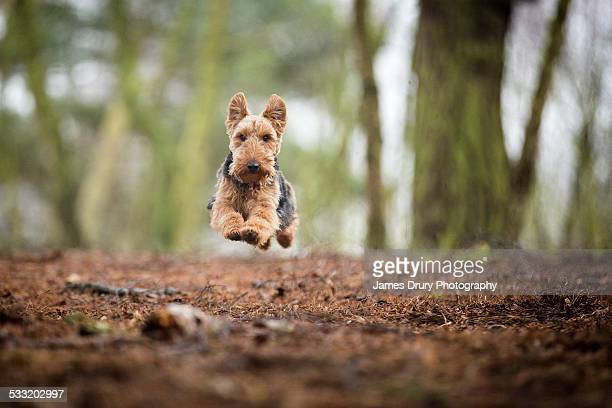 flying dog - york yorkshire stock pictures, royalty-free photos & images
