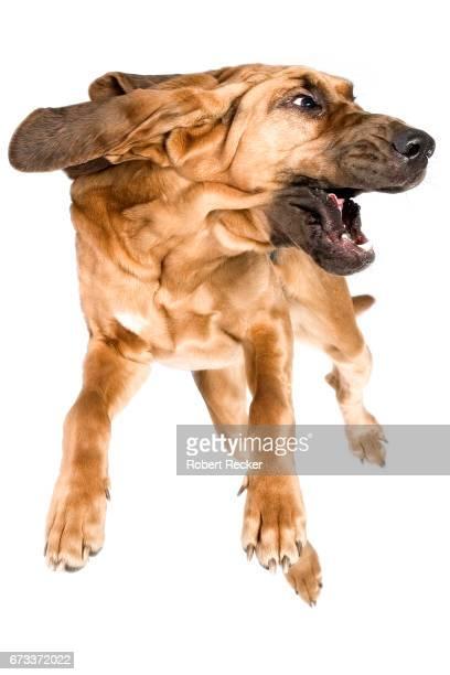 flying dog - vitalität stockfoto's en -beelden