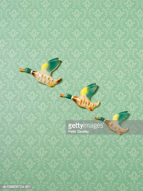 flying duck ornaments on wallpapered wall - duck bird stock photos and pictures
