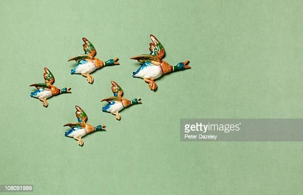 Flying ducks on domestic wall