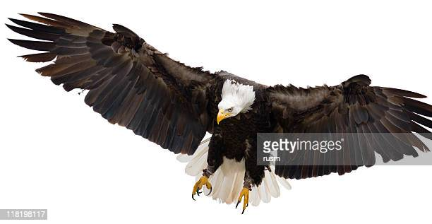 Flying eagle isolated on white background