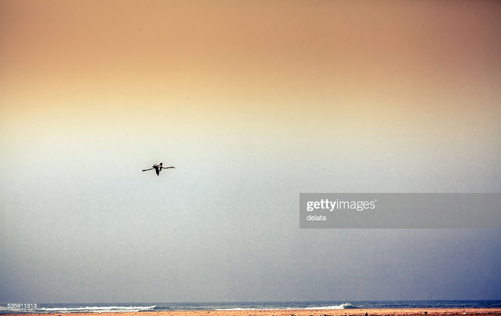 Flying flamingo bird : Stock Photo