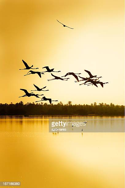 Flying flamingos in a Tropical wildlife reserve