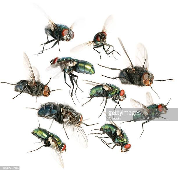 flying flies - insect stock pictures, royalty-free photos & images