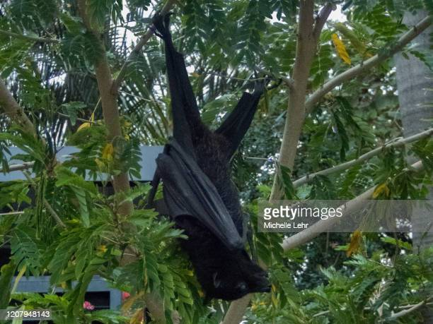 flying fox 2 - flying fox stock pictures, royalty-free photos & images