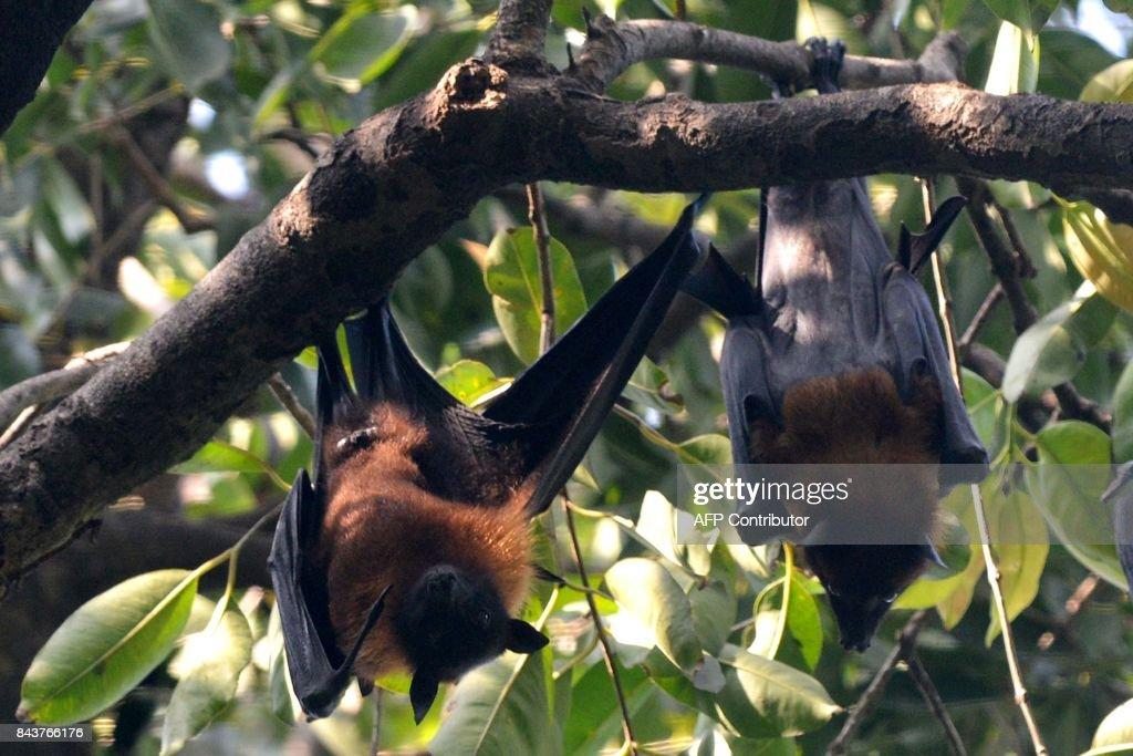 INDIA-ENVIRONMENT-ANIMAL : News Photo