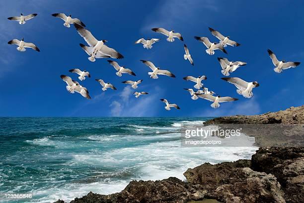 Grupo de aves a voar sobre o mar