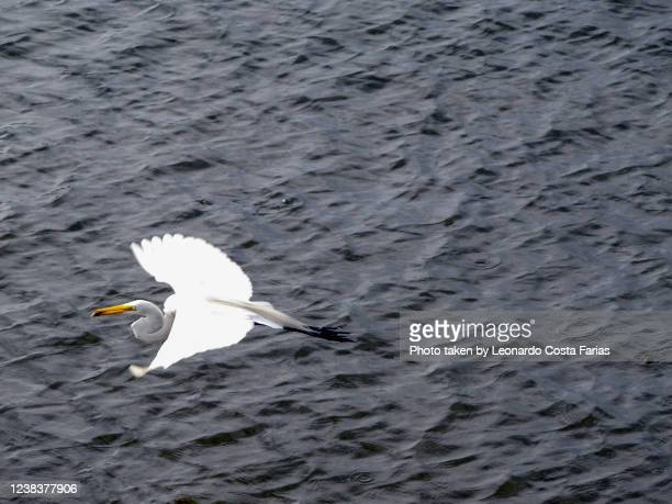flying heron - leonardo costa farias stock pictures, royalty-free photos & images