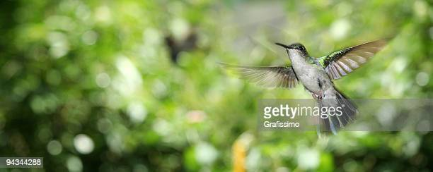 "Flying Meetingraum ""humming bird'im tropischen Wald"
