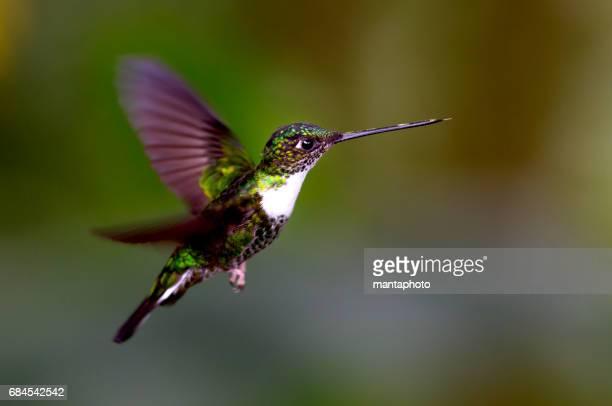 - Flying Hummingbird