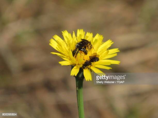flying insects on a yellow flower - the webster stock pictures, royalty-free photos & images
