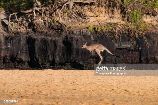 Flying Kangaroo at the Beach