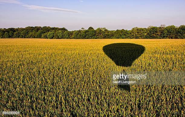 Flying Over the Cornfield