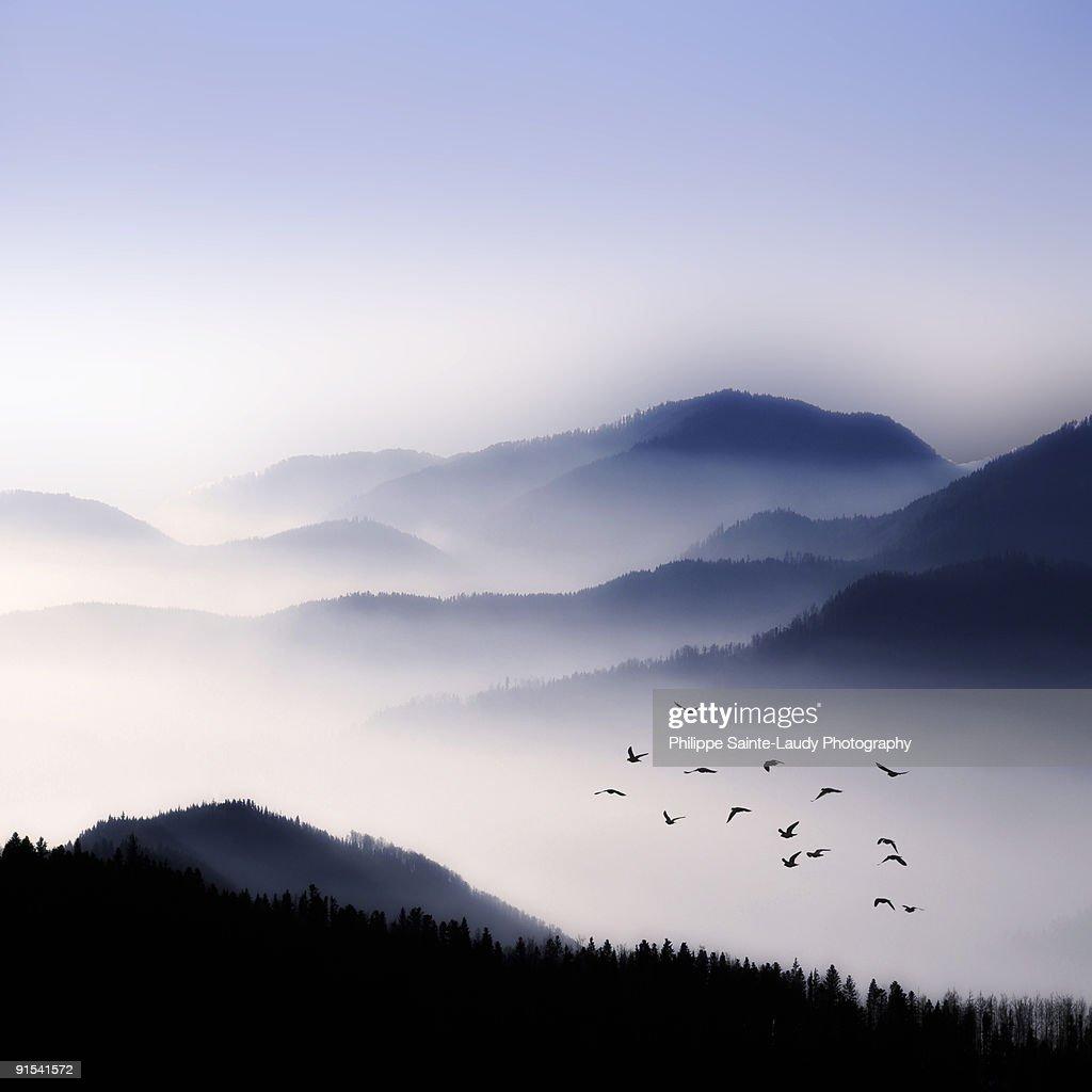 Flying Over The Fog : Stock Photo