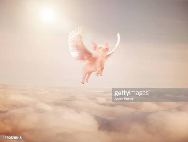 flying pig - animal wing stock pictures, royalty-free photos & images