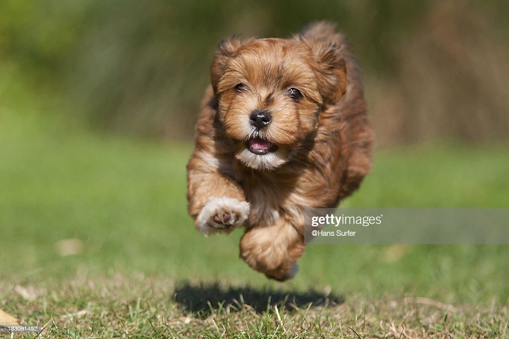 The Unbridled Joy of Puppies Running