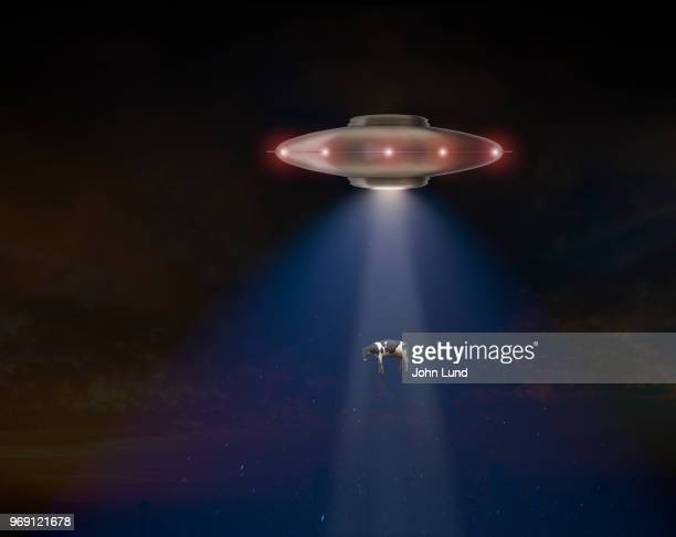 a flying saucer ufo abducts a cow - john lund stock pictures, royalty-free photos & images