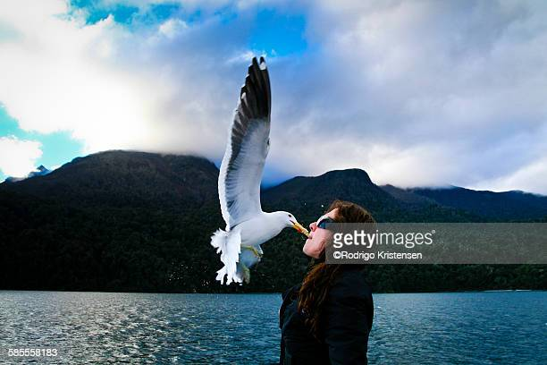 Flying seagull taking food from the mouth of woman