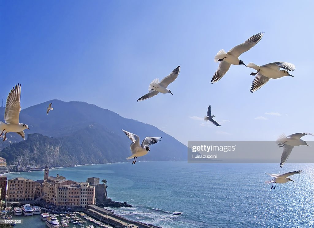 Flying seagulls : Foto stock