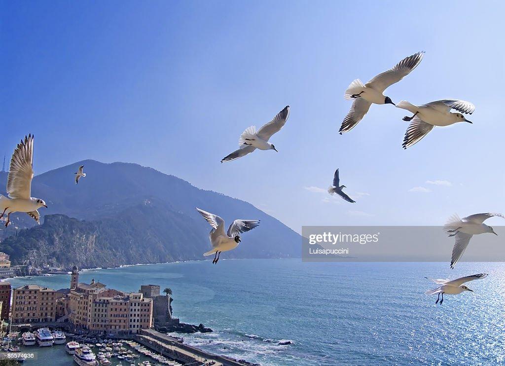 Flying seagulls : ストックフォト