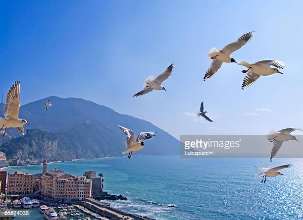 flying seagulls - luisapuccini stock-fotos und bilder