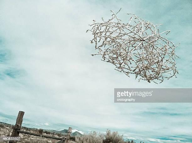 flying tumbleweed - tumbleweed stock photos and pictures