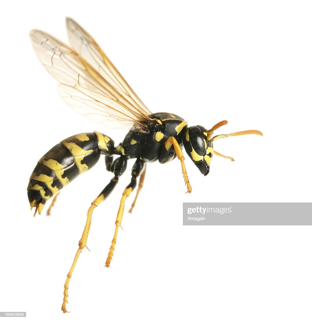 16 104 Wasp Photos And Premium High Res Pictures Getty Images