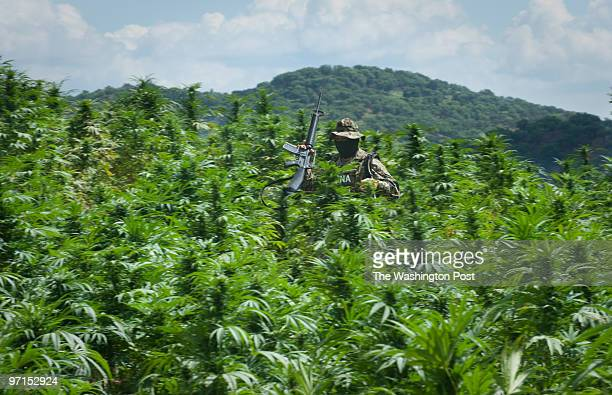 fo_pot Badiraguato Mexico DATE CREDIT Sarah L Voisin More than 60 percent of the Mexican cartels profits in 2006 $86 billion out of $138 billion...