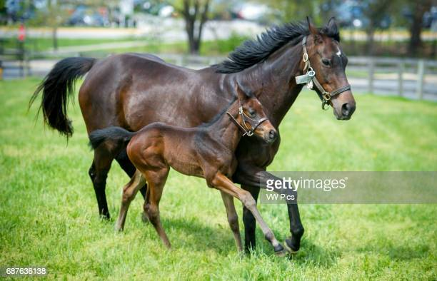 Foal and mare running in pasture