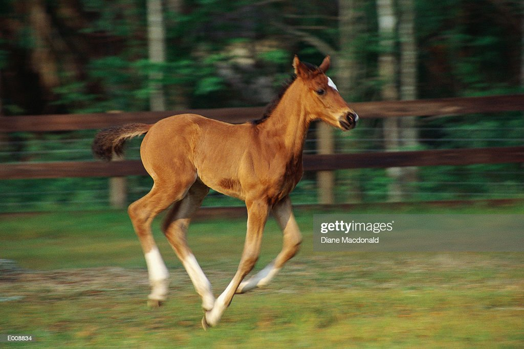 Foal in motion : Stock Photo