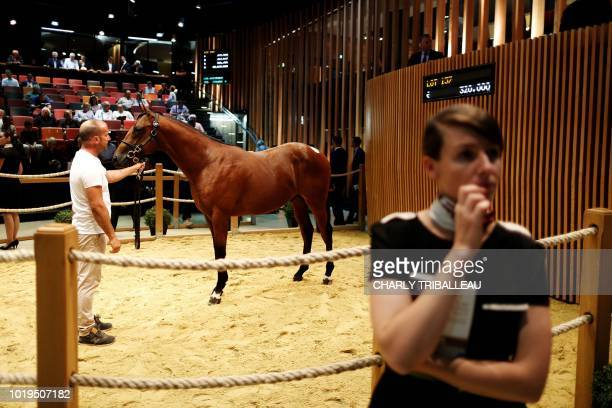A foal is presented and sold during the yearlings sales one of the world renowned annual thoroughbred horse sales in Deauville on August 19 2018 This...