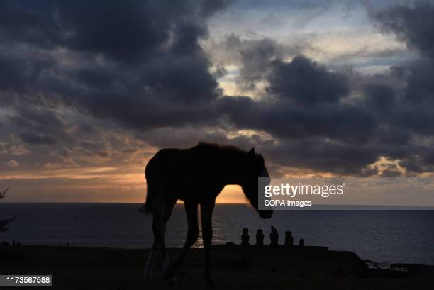 A foal is seen on the Vernal Equinox day near the small village of Hanga Roa The population of wild horses on Easter Island also known as Rapa Nui a...