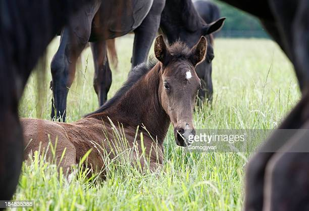 Foal on the meadow