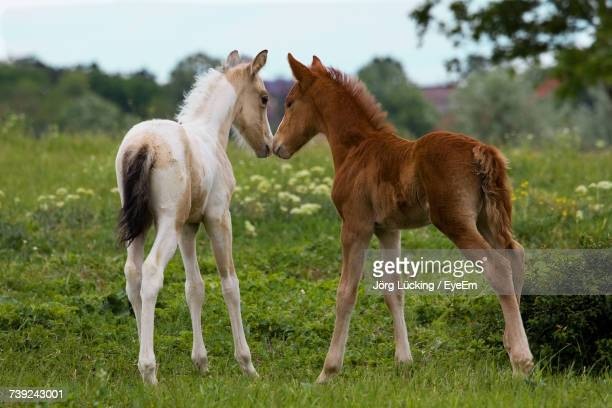 foals standing on field against sky - colts stock photos and pictures