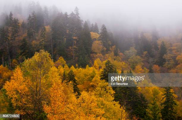fog and autumn colors - newfound gap stock photos and pictures