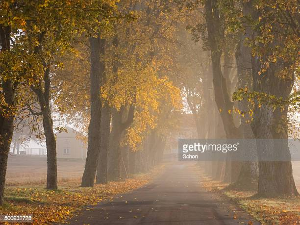 fog and autumn in the avenue - avenue stock pictures, royalty-free photos & images